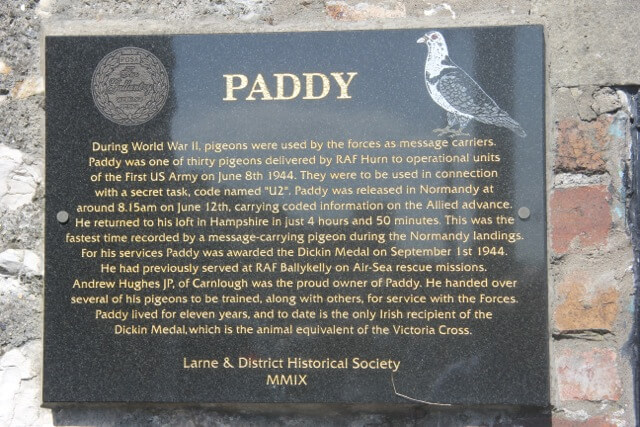 Image result for paddy the pigeon plaque